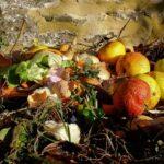 Basura orgánica e inorgánica