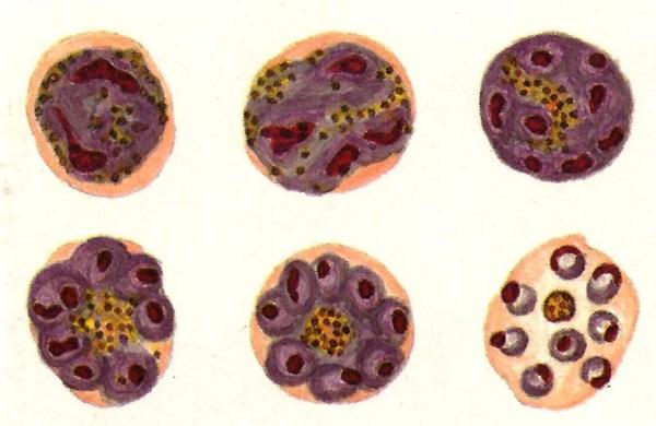 Plasmodios
