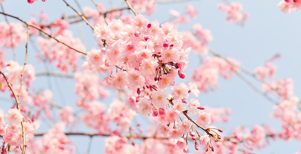 Primavera. Características