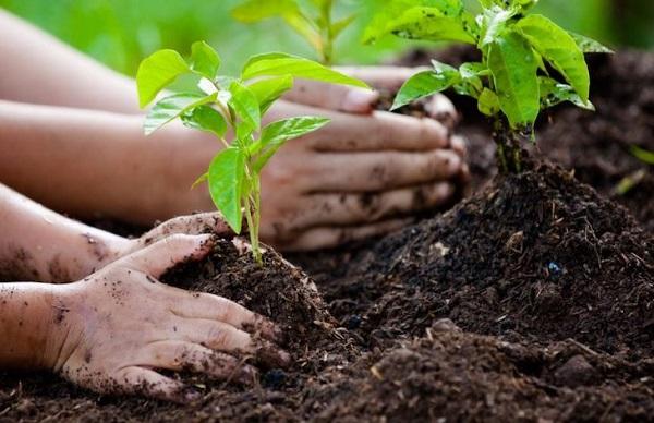 Convivencia con el ambiente