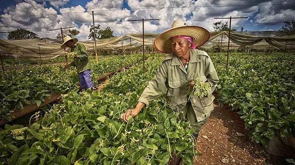 Cultura agricola